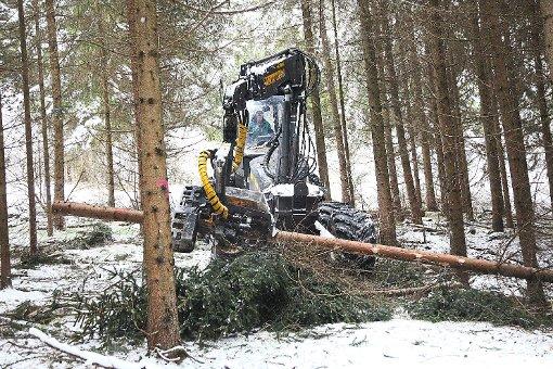 """Bad-Dürrheim: """"Zu mild für die Holzernte"""" - Schwarzwälder Bote"""