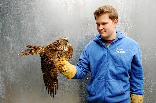 Bisingen: Der Vogel hat Glück im Unglück - Schwarzwälder Bote