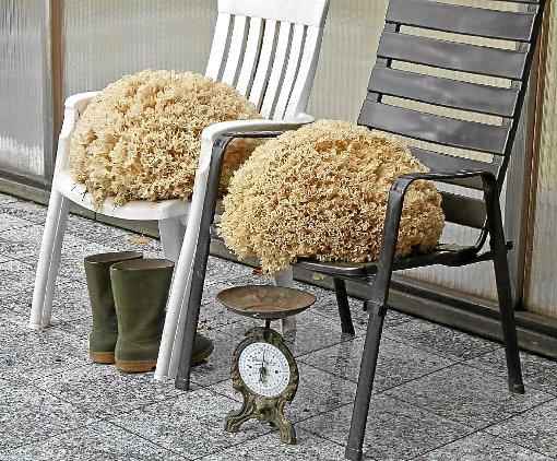 oberwolfach pilze gedeihen pr chtig oberwolfach. Black Bedroom Furniture Sets. Home Design Ideas