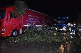 Lkw wird auf B 31 von Baum getroffen