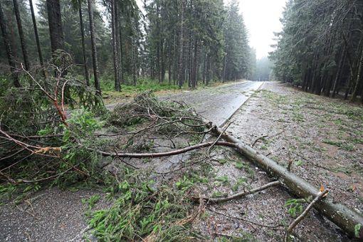 Auch umgestürzte Bäume beschäftigten die Rettungskräfte. (Symbolfoto)  Foto: Eich