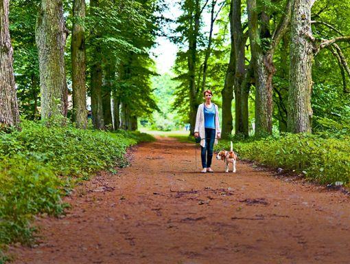 Auch im Wald müssen Hunde an der Leine geführt werden. Foto: © Igor Normann – adobe.stock.com