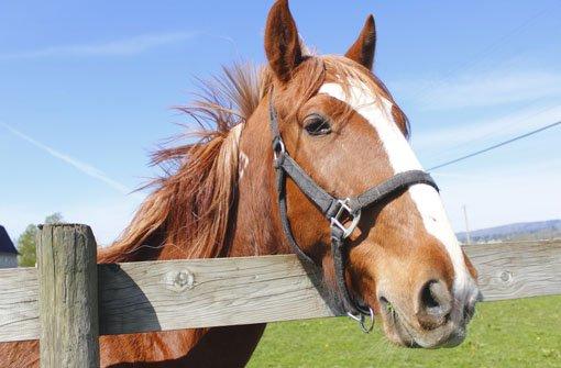 Leidendes Geschöpf: Ein Mann aus einer Kreisgemeinde hat eins seiner Pferde grob vernachlässigt. (Symbolfoto) Foto: Modfos/ Shutterstock