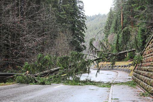 Nichts geht mehr: Zwischen Hardt und Schramberg stürzte ein Baum auf die Straße und blockierte diese komplett. Foto: Ziechaus