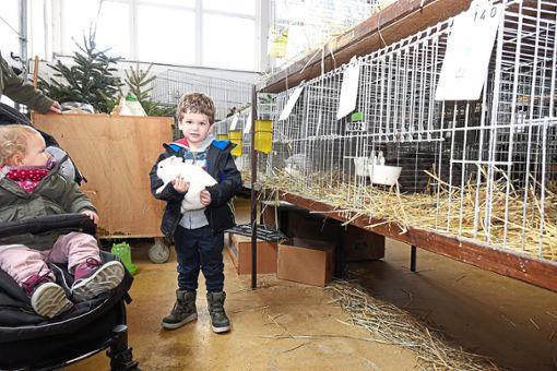 Bei der Lokalschau der Wildberger Kleintierzüchter konnten Kinder die Tiere aus nächster Nähe erleben.  Foto: Buchner Foto: Schwarzwälder Bote