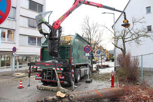 13 Ahornbäume werden am Dienstagvormittag im Bereich Sturmbühlstraße und Marktplatz von der Firma Niefer Baumpflege gefällt.   Foto: Pohl Foto: Schwarzwälder Bote