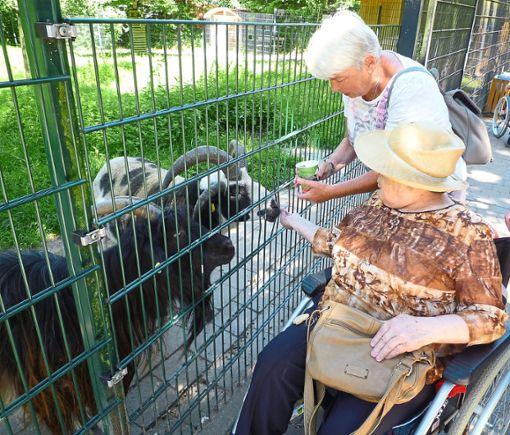 Die Tiere im Pforzheimer Wildpark legten manierliche Tischsitten an den Tag, so dass sich die Sorge der Zweibeiner um ihre  Finger als unbegründet erwies.  Foto: Alten- und Pflegeheim Foto: Schwarzwälder Bote