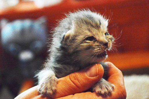Zahlreiche Katzen wurden gerettet. Foto: Cools