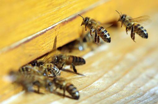 150.000 der kleinen Insekten wurden bei Nagold gestohlen. (Symbolfoto) Foto: dpa