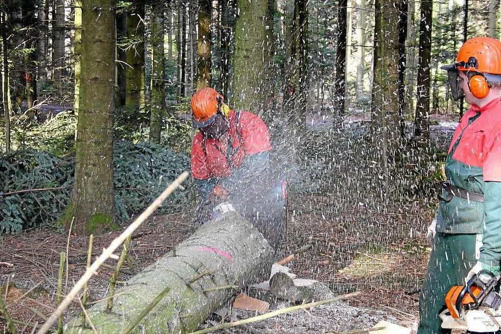 eichhörnchenwald königsfeld