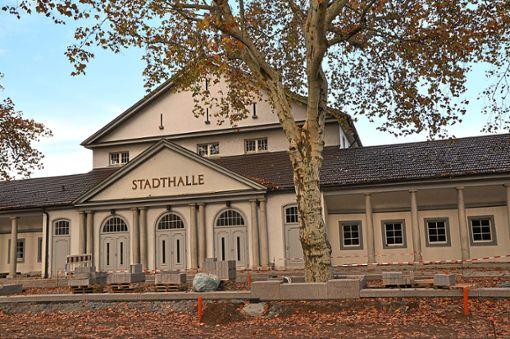 Die Platanen auf dem Stadthallenvorplatz sind wieder Thema im Hausacher Gemeinderat gewesen. Foto: Kornfeld
