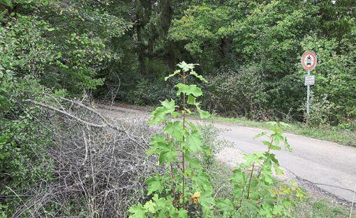 In einem Waldgebiet an der Landesstraße 453 zwischen Frohnstetten und Kaiseringen wurde am Montag die Leiche eines Neugeborenen gefunden.  Foto:  Warnack
