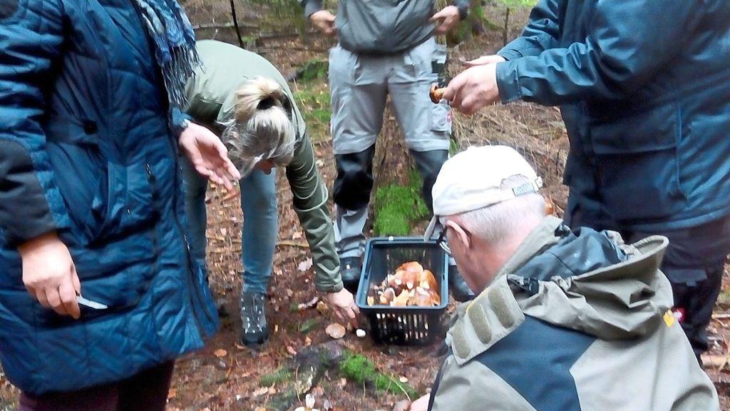 Straubenhardt: Zum Schluss wird jeder Pilz begutachtet - Straubenhardt - Schwarzwälder Bote