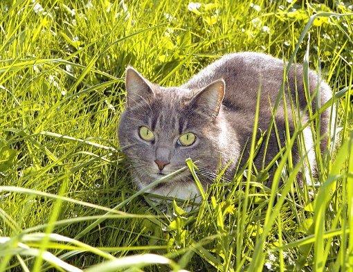 Das ungeklärte Verschwinden mehrerer Katzen bereitet ihren Besitzern im Hornberger Wohngebiet Rubersbach und im benachbarten Feriendorf Sorgen. Foto: dpa