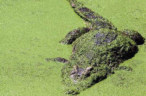 Die ausgerückte Streife machte das Krokodil am Ufer gegenüber dem Parkhaus aus. (Symbolfoto) Foto: dpa