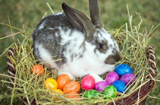 Warum bringt eigentlich der Osterhase die Eier? Antworten finden Sie in unserem Oster-ABC. Foto: dpa-Zentralbild