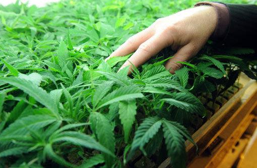 Einer der Beschuldigten flüchtete und ließ etwa ein Kilogramm Marihuana zurück. (Symbolfoto) Foto: dpa