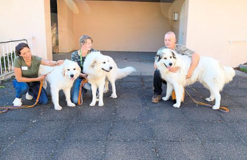 Herdenschutzhund-Ausbilder Michael Witter mit sienen Hunden.   Foto: Stadler