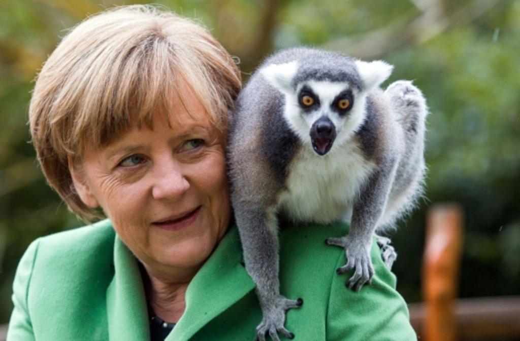 Bildergebnis für lemuren