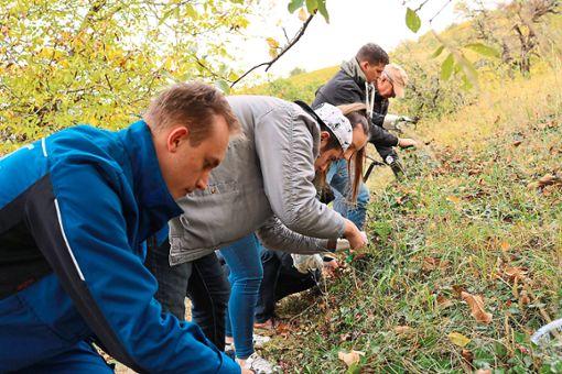 Hunderte freiwillige Helfer beteiligten sich bei Naturschutz- und Pflegeaktionen.  Foto: Naturpark