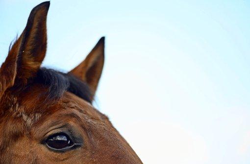 Sie sind groß, prächtig und üben eine ungeheure Anziehungskraft aus. Doch was fasziniert uns so an Pferden? Foto: dpa