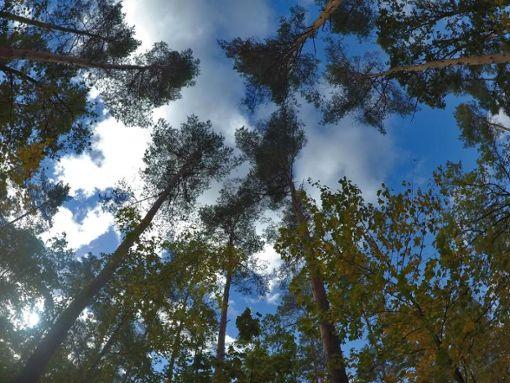 Der Zustand des Waldes im Südwesten bereitet Experten Sorge. (Symbolbild) Foto: dpa