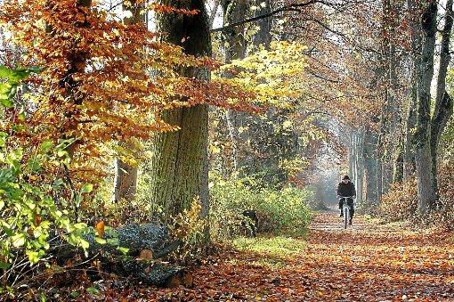 Ein Ausflug in den Wald lohnt sich zu jeder Jahreszeit. Der Stadtwald Oberndorf umfasst die Größe von 1211,6 Hektar.  Foto: Gössl Foto: Schwarzwälder-Bote