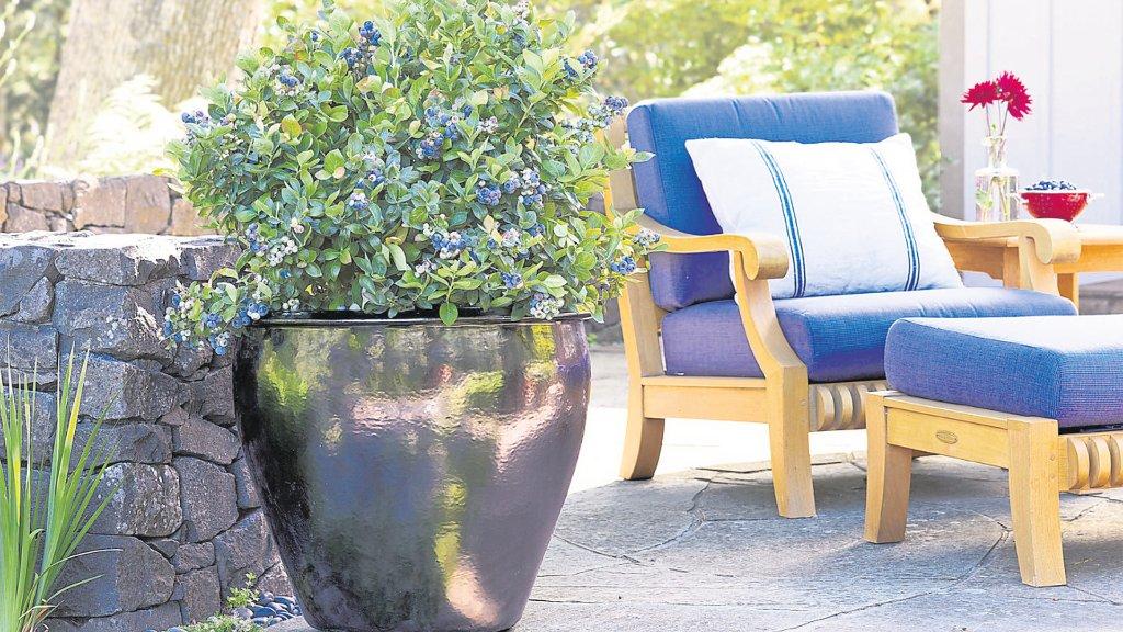 garten balkon besondere pflanzen neuheiten garten und balkon schwarzw lder bote. Black Bedroom Furniture Sets. Home Design Ideas