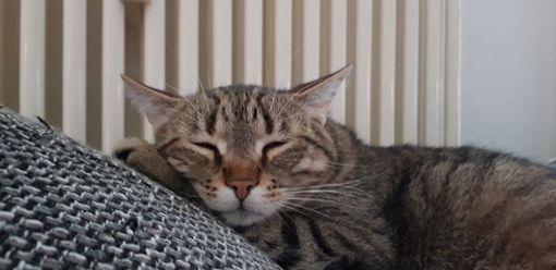 Ganz entspannt zum Weltkatzentag.  Foto: Matthias König