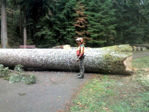 Forstwirtschaftsmeister Achim Bergmann fällte die Brückles-Tanne an der Straße nach Hinterrötenberg.  Foto: Privat