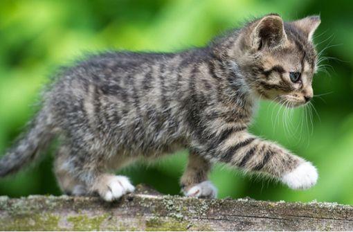 Der Katze ist bei der gefährlichen Straßenüberquerung nichts passiert. (Symbolfoto) Foto: dpa-Zentralbild