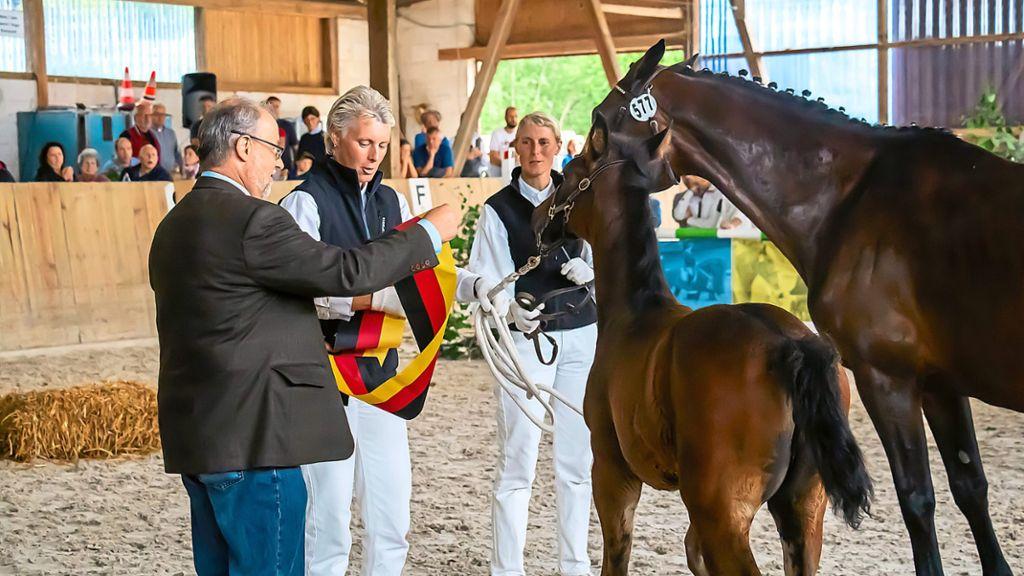 Bekanntschaften pferdefreunde