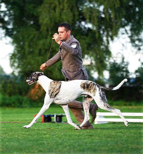 Zahlreiche Windhunde sind heute und morgen im Schlosspark zu bewundern.  Foto: Veranstalter Foto: Schwarzwälder-Bote