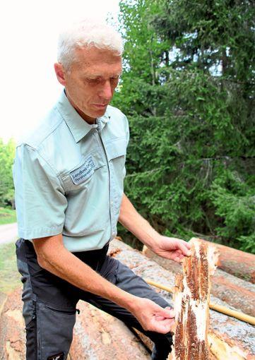 Förster Dominik Leitz zeigt die vom Borkenkäfer befallene Rinde einer Fichte.  Fotos: Gegenheimer Foto: Schwarzwälder Bote