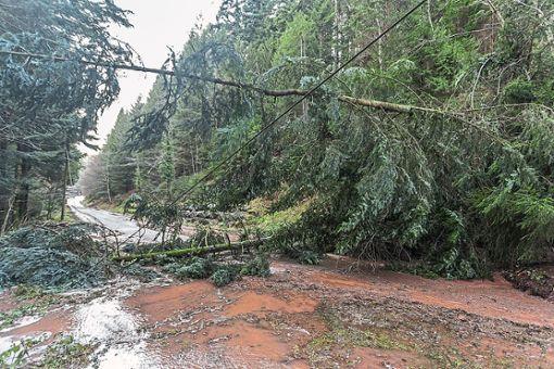 Waldweg bei Reinerzau. Alleine die Schäden an der Infrastruktur liegen im sechsstelligen Bereich.    Foto: Lange