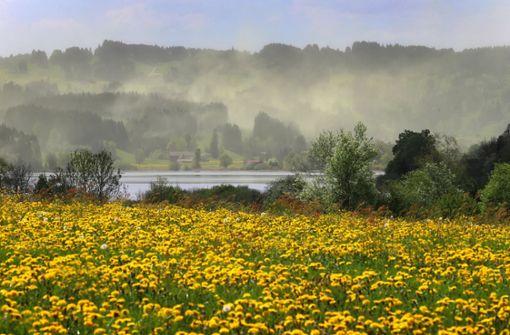 Der gelbe Blütenstaub lässt dieser Tage nach. (Symbolfoto) Foto: dpa