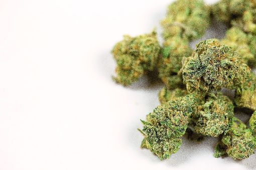 Marihuana-Knospen. (Symbolbild)   Foto:©pattersonic–adobe.stock.com Foto: pattersonic-adobe.stock.com