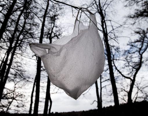 Muss das sein? Plastik im Baum? Natürlich nicht. Umweltschutz fängt bei jedem selber an.   Foto: Pleul Foto: Schwarzwälder Bote