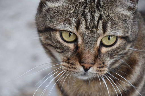 Vor allem Katzen  hat die Familie gesammelt und wohl auch gezüchtet.   Foto: pixabay