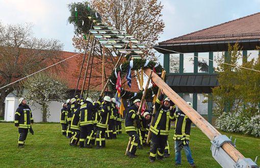 Mit vereinten Kräften hievten die Feuerwehrleute den Maibaum in die Höhe.  Foto: Herzog Foto: Schwarzwälder Bote
