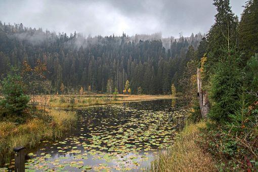 Zum Huzenbacher See geht es am ersten der beiden Pilgertage.   Foto: Müller Foto: Schwarzwälder Bote
