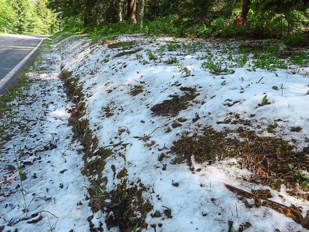 Bad Wildbad Schnee
