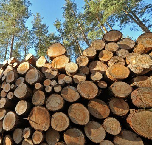 Weil im Staatswald um Rosenfeld kein Nadelholz eingeschlagen wird, gibt es auch weniger Laubbrennholz.  Foto: Schutt Foto: Schwarzwälder Bote