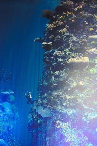 Die Ausstellung in Pforzheim entführt in eine faszinierende Unterwasserwelt  Foto: SWV Foto: Schwarzwälder Bote