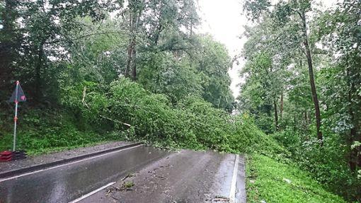 Zahlreiche Bäume fielen dem Sturm zum Opfer. Die Altburger Straße musste deshalb gesperrt werden. Foto: Maci