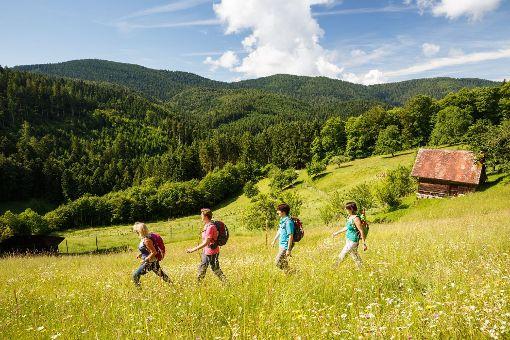 Schwarzwälder Wandersinfonie: Schwarzwaldsteig, Wiesensteig, Himmelssteig. Foto: © KTG Foto David Lohmüller