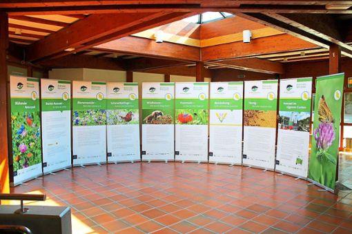 So ähnlich könnte das  Thema Insekten durch den Naturpark am Wochenende in der Schlosshalle Wolfach dargestellt sein. Die komplette Wanderausstellung ist in drei Lebensbereiche unterteilt. Auch Führungen werden angeboten.   Foto: Kalmbach-Ruf