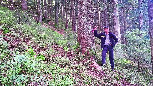Markus Schätzle, Revierleiter Oberwolfach-Süd, kündigt  Holzerntemaßnahmen  im Gemeindewald am Gütschkopf an. Foto: Amt für Waldwirtschaft