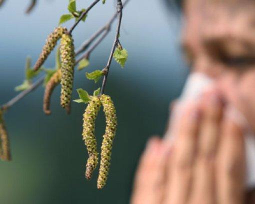 Die Pollenbelastung macht derzeit wieder vielen zu schaffen. (Symbolfoto)  Foto: dpa