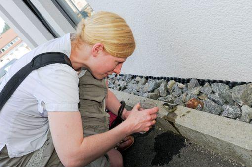 Auch, wenn es gut gemeint ist: Finder  sollten dem hilfsbedürftigen  Vogel auf keinen Fall Wasser direkt in den Schnabel gießen. Bei einem Anflugtrauma sollte der Vogel in einem Karton gelagert werden, bis er wieder fit ist.     Foto: Archiv/Gräff
